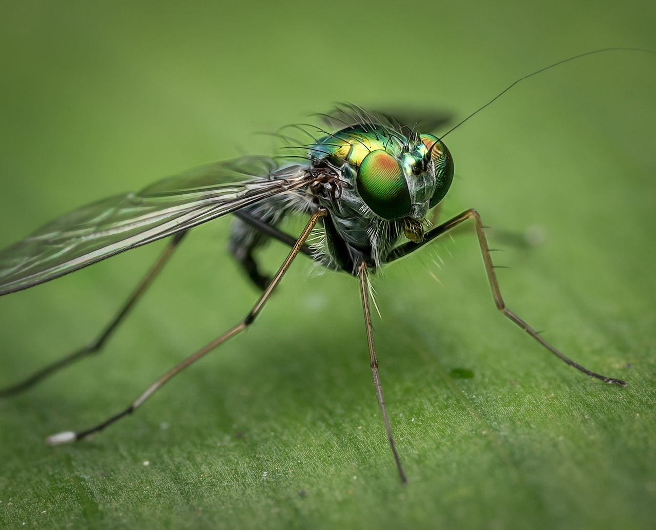10 Tips For Killing Flies In Your House
